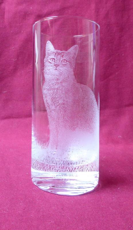 verre 10 grad chat à poil court