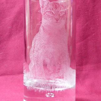 verre à eau disco chat